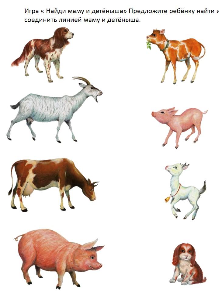 Твоей рожи, картинки домашние животные и их детеныши для детей распечатать